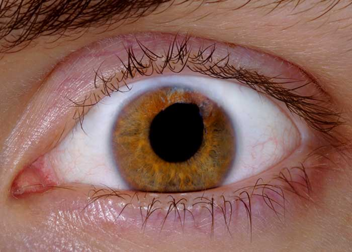 אנטה גז'שיקובסקה - העין